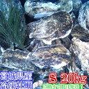 Sサイズ20kg(約240粒)冷凍便送料無料! 宮城県産 殻付き牡蠣 殻付き 殻付 カキ 加熱用 一年子 松島牡蠣屋 無選別牡蠣