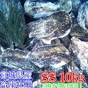 SSサイズ10kg(約200粒)冷凍便送料無料! 宮城県産 殻付き牡蠣 殻付き 殻付 カキ 加熱用 一年子 松島牡蠣屋 無選別牡蠣