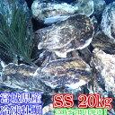 SSサイズ20kg(約400粒)冷凍便送料無料! 宮城県産 殻付き牡蠣 殻付き 殻付 カキ 加熱用 一年子 松島牡蠣屋 無選別牡蠣