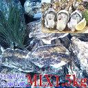 牡蠣【1000円ポッキリ 送料無料】殻付き 牡蠣 1.5kg