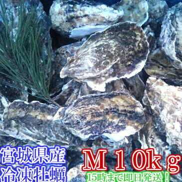 Mサイズ10kg(約80粒)冷凍便送料無料! 宮城県産 殻付き牡蠣 殻付き 殻付 カキ 加熱用 一年子 松島牡蠣屋 無選別牡蠣