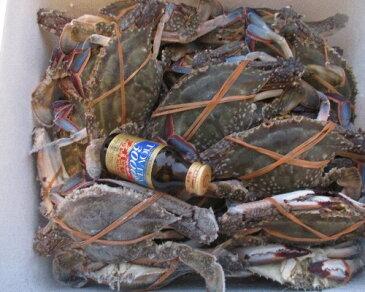 激安!宮城県産 冷凍 B級品 ワタリガニ 10kg 渡り蟹 脱皮後で殻がちょっとだけ柔らかなものです。オスメス