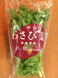 わさび菜 愛媛産【野菜セット同梱で送料無料】