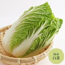 白菜 長崎、鹿児島産等【野菜セット同梱で送料無料】