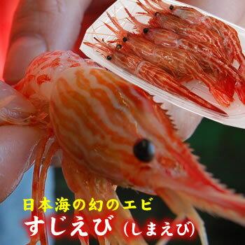 幻のエビ!すじえび(しまえび)【冷凍】(約230g)[お刺身可]≪浜坂産≫年々獲れなくなっておりますので、大変希少なエビです!!(シマエビ・スジエビ)
