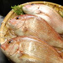 業務用 天然鯛(たい・タイ)【冷凍】1枚入り(約25-28cm)【浜坂産】