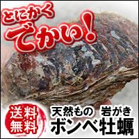 大分産【送料無料】ドでか!ボンベ牡蠣(天然岩牡蠣)【生】超ビッグ 2個×800g-1kg程度かき、...