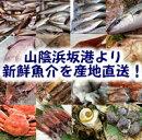【送料無料】山陰直送「朝とれおまかせ鮮魚・魚介セット」