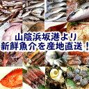 おまかせ 鮮魚