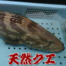 朝とれ!新鮮!山陰浜坂港の幻の高級魚「クエ」