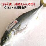 ツバス(ハマチ)(生冷凍・調理済み) 1尾 約250-299g(調理前重さ) 【浜坂産】