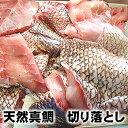 訳あり・天然真鯛切り落し(冷凍)約500g(山陰浜坂産)(たい・タイ)