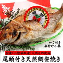 【送料無料】尾頭付き天然鯛(たい)の姿焼き 盛大なお祝いに超ビッグサイズ 1...