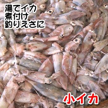 小イカ(冷凍) 約500g(浜坂産) ※主に白イカです。 (小型のイカ・豆いか・釣・えさ・エサ・餌)