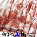 (旬もの予約・送料無料セール)朝とれ白イカ(生)約1kg入(4〜7杯入)【山陰沖...