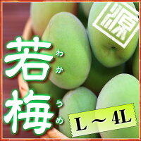 日本一のブランド梅和歌山県みなべ町産紀州南高梅青梅L〜4Lサイズ混合約3kg