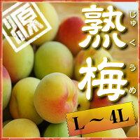 梅干しに最適な完熟南高梅和歌山県みなべ町産紀州完熟南高梅L〜4Lサイズ混合約3kg