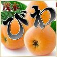 初夏の高級フルーツ 和歌山県下津町産 茂木びわ 約1kg(250g×4パック)