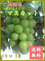 岡山ぶどう/ブドウ『マスカット』1キロ2房(種あり)【ご進物・贈答用フルーツ】A2
