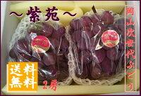 おかやま次世代ぶどう紫苑(しえん)2キロ箱2房入岡山産1房800グラム以上