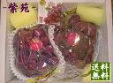 【予約商品】おかやま次世代ぶどう 紫苑(しえん)2キロ箱2房入 岡山産 1房800グラム以上