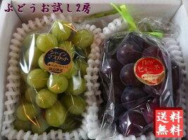 【予約販売】【ご家庭用フルーツ】岡山ぶどう/ブドウお試し2房入