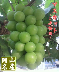 【予約販売】岡山ぶどう/ブドウ『マスカット』1キロ2房(種あり)【ご進物・贈答用フルーツ】A2