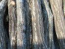 原木しいたけ植付済み ほだ木※準備出来次第お届け4月中旬予定