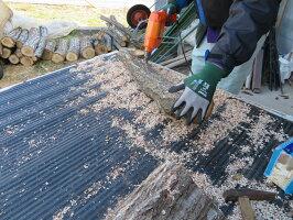 (予約販売)原木しいたけ植付済み ほだ木お届け予定令和3年4月中旬頃