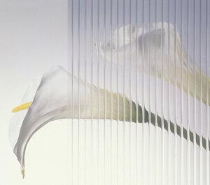 【超簡易・窓の断熱対策】ポリカプラダンをオーダーサイズでカットしてお届けします旭硝子 ツ...