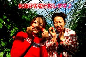 【送料無料】【農家直売】ミネラルたっぷりの濃赤フルーツ・ミディー・レッドオーレ!2kgミニトマト(トマト)05P13Dec13