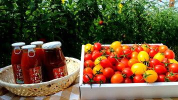 05P30Nov13送料無料【トマトギフト】トマト・ミニトマト4〜5種類♪果実のメロディー・ご贈答・お歳暮・お年賀に送料無料