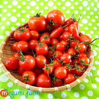 とまとミニトマトフルーツトマト