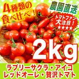 秋冬完熟トマト【リコピンで日々の健康を!】まるでフルーツ♪ レッドオーレ・贅沢トマト・アイコ・ラブリーサクラの食べ比べ詰め合わせ♪2kg ミニトマト【農家直送】