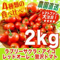 レッドオーレ・贅沢トマト・アイコ・ラブリーサクラの食べ比べ詰め合わせ♪2kgミニトマト