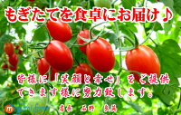 【送料無料】【おまけ付き!開店セール】リコピン・ミネラルたっぷりの樹上完熟フルーツミディー、レッドオーレ!たっぷり3kg・トマト・ミニトマト