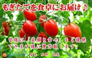【おまけ付き!開店セール】リコピン・ミネラルたっぷりの樹上完熟フルーツミディー、レッドオーレ!たっぷりボリューム5kg・ミニトマト・トマト