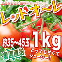 新鮮【農家直送】リコピン、ミネラルたっぷりの濃赤フルーツミディー・もぎたて・レッドオーレ!1kg トマト・ミニトマト