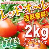春完熟トマト まるでフルーツ♪ 【送料無料】【農家直売】 ミネラルたっぷりの濃赤フルーツ・ミディー・レッドオーレ!♪2kg ミニトマト