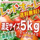 送料無料【おまけ付き!開店セール】リコピン・ミネラルたっぷりの樹上完熟フルーツミディー、レッドオーレ!たっぷりボリューム5kg・おやつトマト・ミニトマト