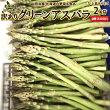 【訳あり】【送料無料】北海道ニセコ産グリーンアスパラ2kg