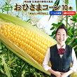 【送料無料】北海道産朝もぎとうもろこし生で食べれるおひさまコーン