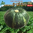 北海道ニセコ産かぼちゃ5kg