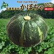 かぼちゃ送料無料10kg北海道ニセコ産秀品低農薬栽培北海道産カボチャハロウィン