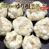 訳あり ゆり根 送料無料 1kg 北海道産 ニセコ産 高級食材 ゆりね 百合根 ユリ根 混みサイズ わけあり ワケアリ