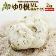 ゆり根2kg北海道産ニセコ産高級食材百合根ユリ根混みサイズ送料無料