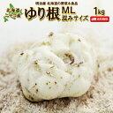 ゆり根 送料無料 1kg 北海道産 ニセコ産 高級食材 百合...