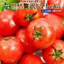 贅沢トマト 送料無料 約4kg 北海道 ニセコ産 混みサイズ...