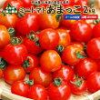 ミニトマト2kgあまっこ送料無料北海道羊蹄山麓産野菜ギフトとまとクール便冷蔵