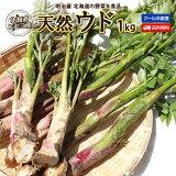 うど 送料無料 1kg 天然 生 北海道 ニセコ産 春の山菜 クール便 うど 独活 ウド 山菜